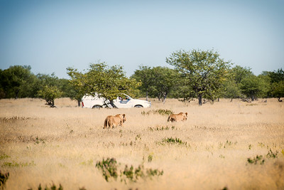 Welcome to Namibia, Vegetarians
