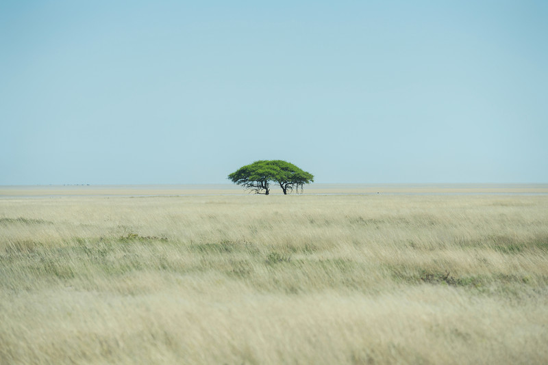 Forest in Namibia