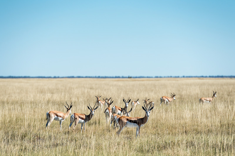 More wild game than people in Namibia
