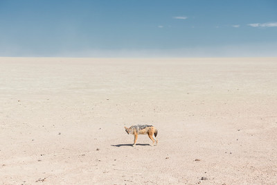 Alone in Namibia