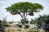 Birds house in Namibia