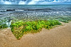 Green hair of Pacific Ocean.<br /> Ulva fasciata - Green algae (seaweeds) - food for many sea species in Hawaii.