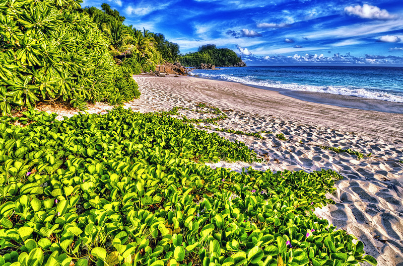 There is few places on Earth, where is no one around you in the beach. Seychelles one of them. ... but doesn't  meant that you can swim...