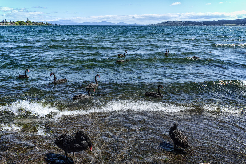 Wind in Lake Taupo
