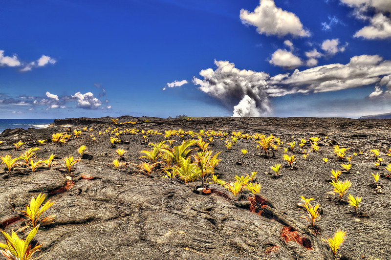 Because Mauna Loa and Kīlauea are active volcanoes, the island of Hawaiʻi is still growing. Between January 1983 and September 2002, lava flows added 543 acres (220 ha) to the island. Lava flowing from Kīlauea has destroyed several towns, including Kapoho in 1960, and Kalapana and Kaimū in 1990.
