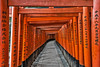 Lost in Kyoto orange gates