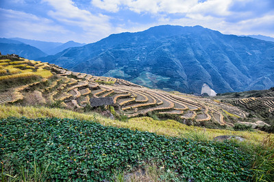 Rice fields. China. Life time experience.