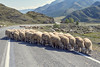 Hiding from sun. Road block in Altai.