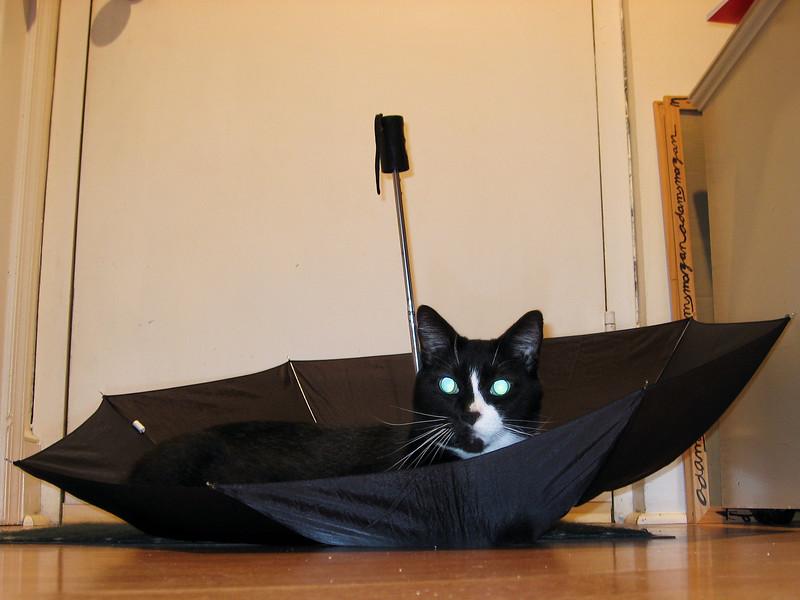 Pavlov - it's raining cat's and... erm... ok, it's just raining cat
