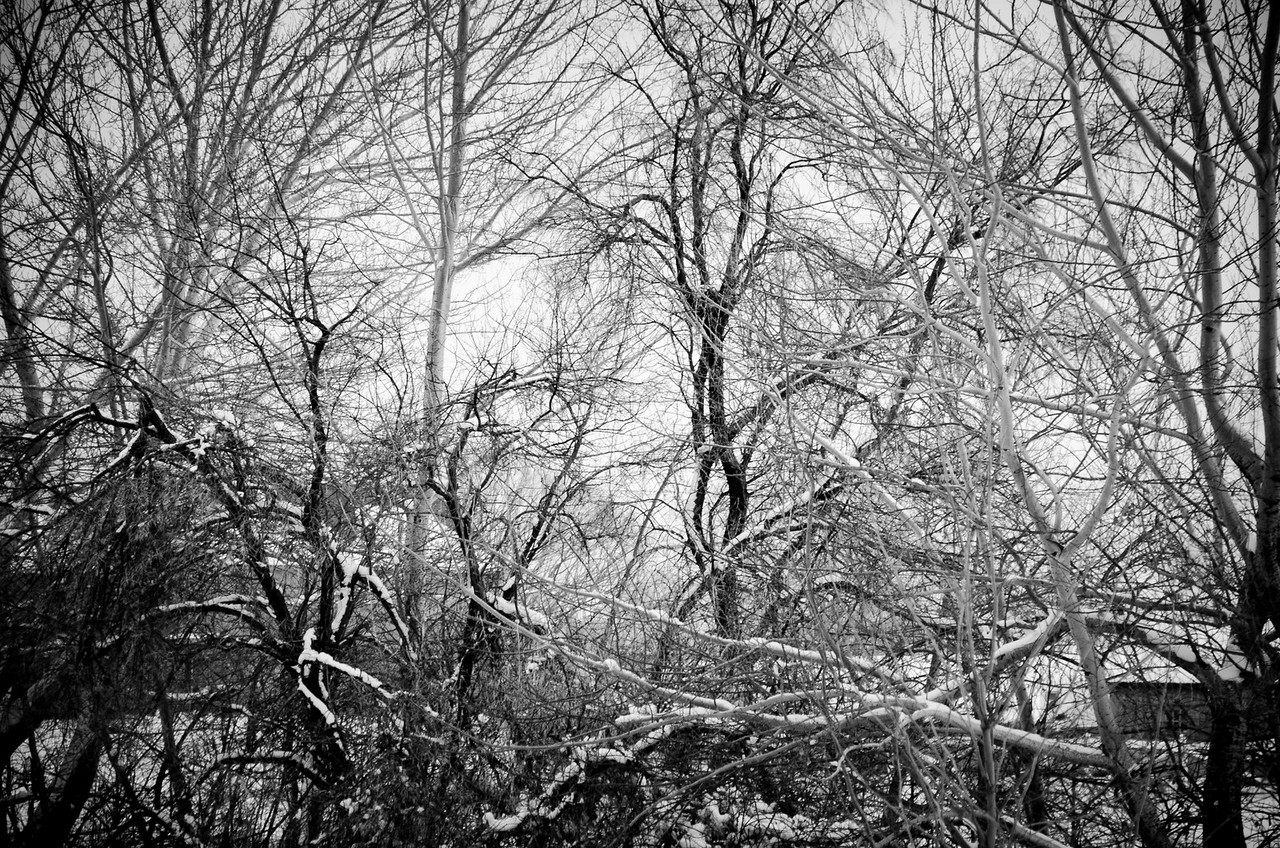 Tangled Trees in Winter