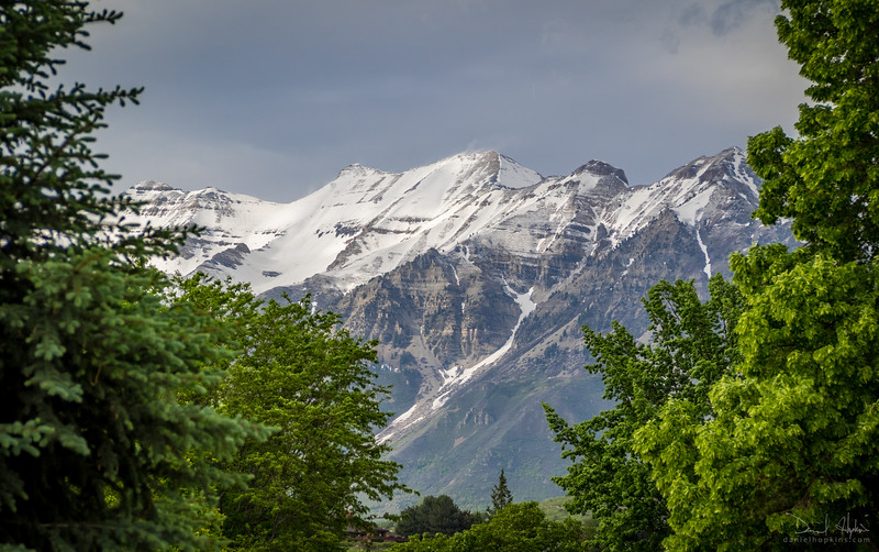 Timp View