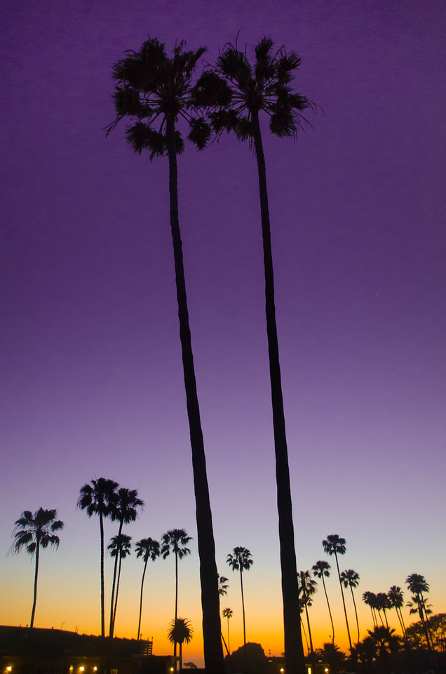 Pair of Palms
