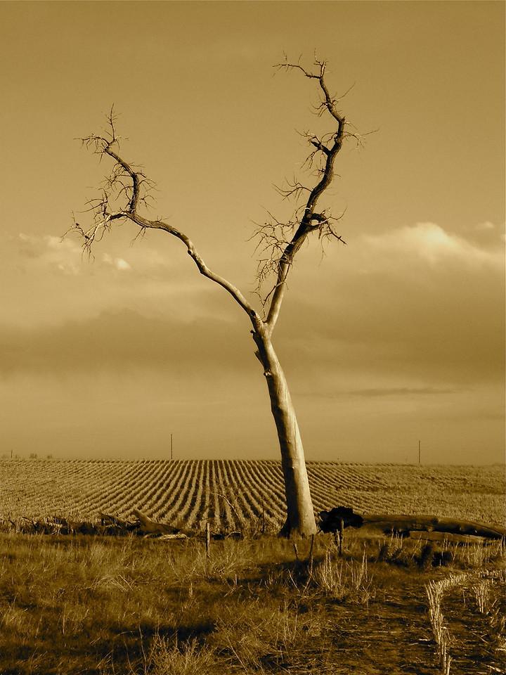 Y Tree