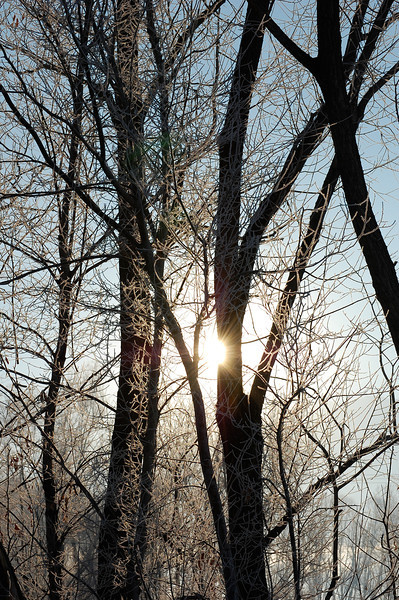 Midwinter Morning Sun