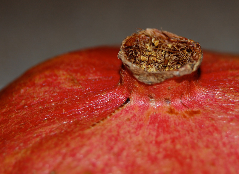 Pomegranate Stem
