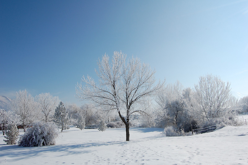 Iced Landscape