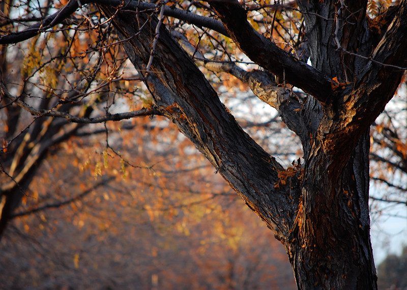 Simple Fall Scene