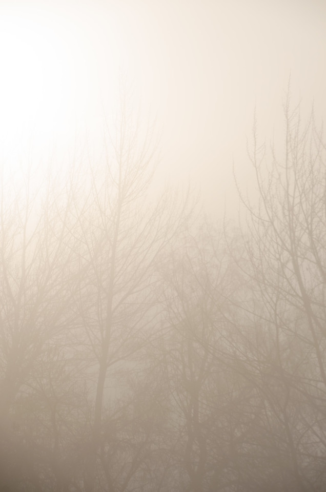 Fog on a January Morning