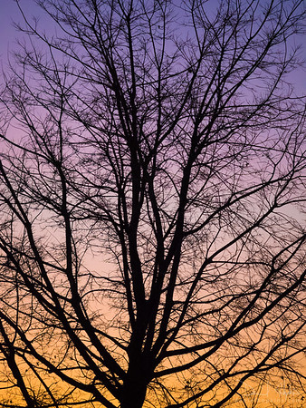 During Sunset after Leaf Fall
