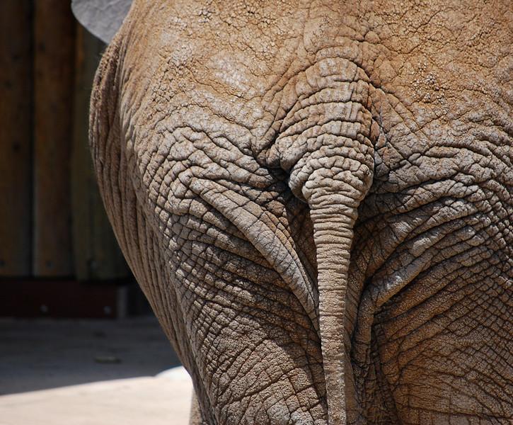 Saggy Baggy Elephant