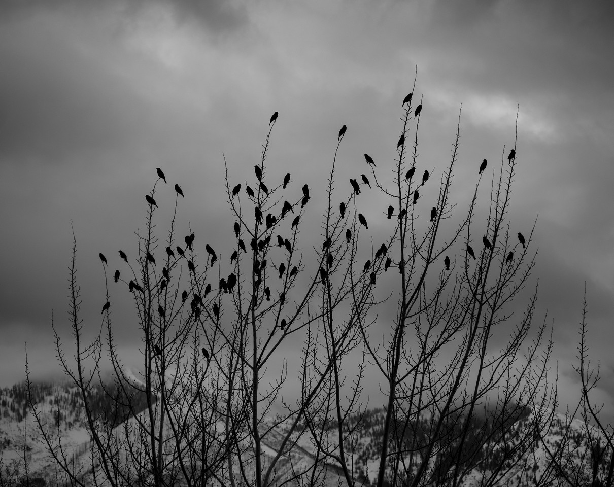 Sentinels of Winter