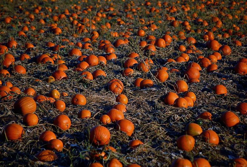 Where the Pumpkins Live