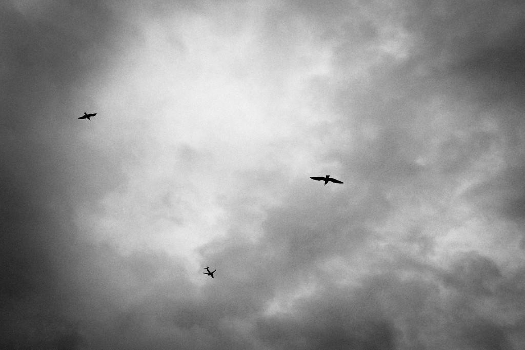 Birds, Three Different Ones
