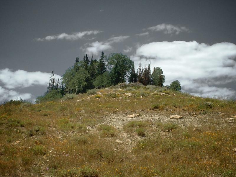 Treed Hilltop