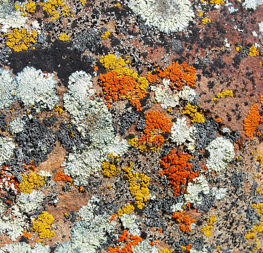 I'm Lichen these Colors
