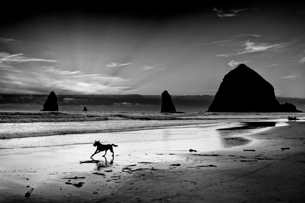 Fetch at Haystack Rock