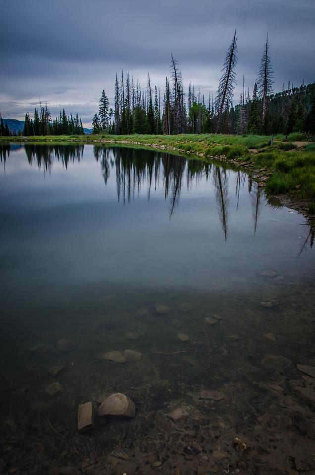 Potter's Pond