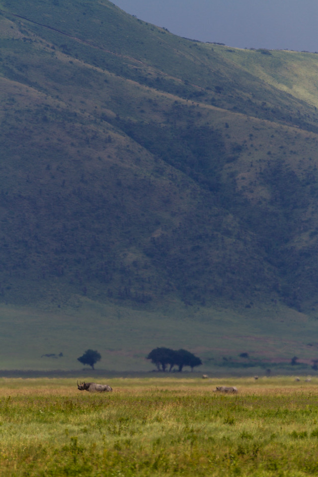 Rhinoceros standing in grassland - East Africa - Tanzania