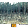 Photograph of debris found at the scene in Somerset County, Pennsylvania, where Flight 93 crashed.