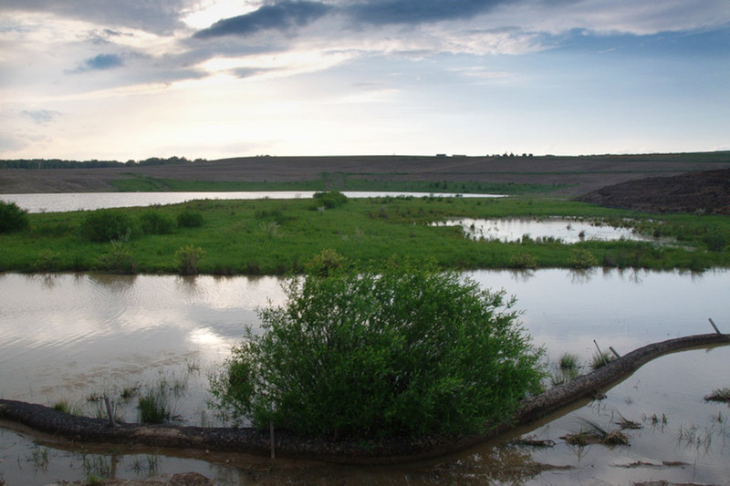 Wetlands, May 2011 (Image credit:  Dick Snodgrass)