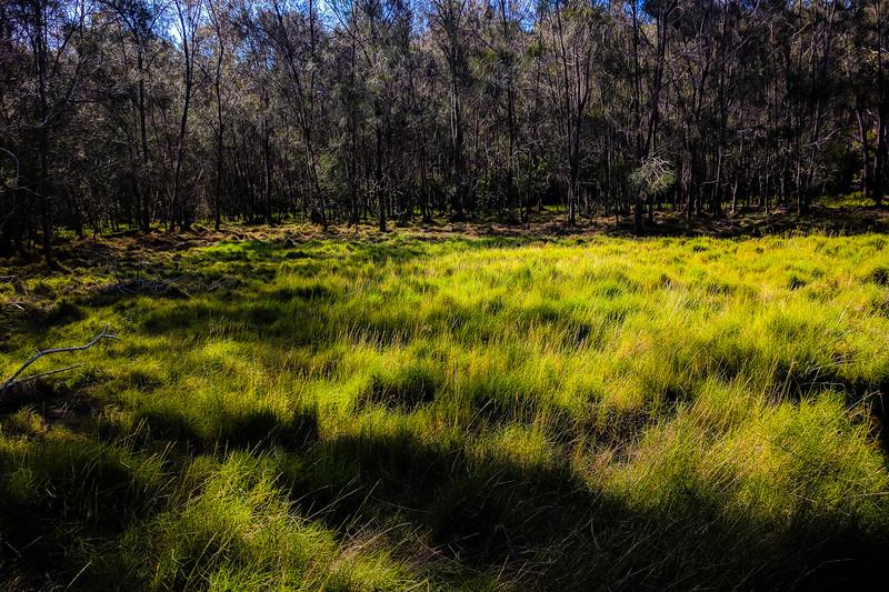 Boondall Wetlands