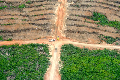 Deforestation for palm oil in Peru