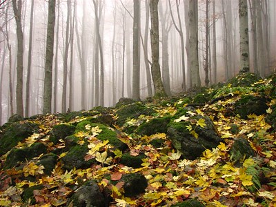 Bulgaria, beech forests in Central Balkan National Park near to Kalofer,