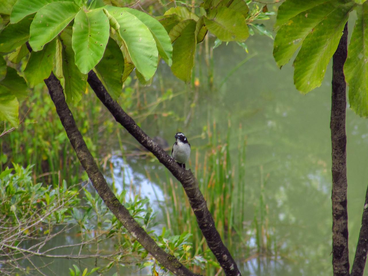Birds from La Alsacia