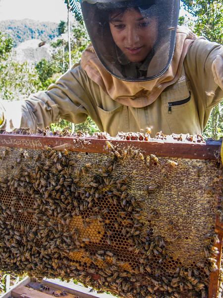 A beekeper analysing a hive.