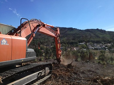 Villagers uprooting eucalyptus to create a protective barrier of fire-resistant native species