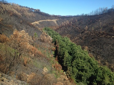 Native oaks and chestnuts are fire-resistant and did not burn