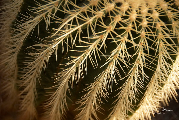 Cactus in the Amsterdam Botanical Gardens