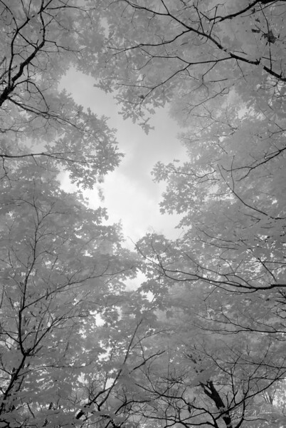 Overhead Trees in Infrared