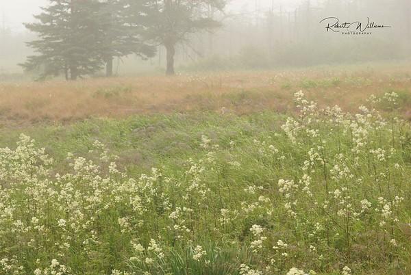 Castalia Marsh in the Fog