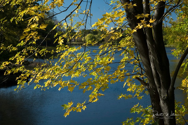 Autumn Leaves over the Rideau River at Billings Bridge