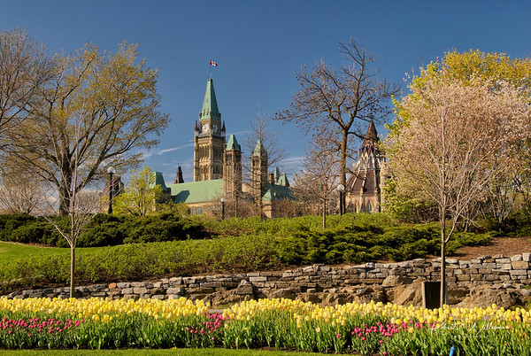 The Peace Tower in May