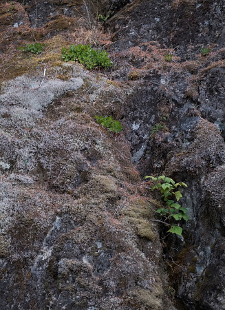 Rocks and Moss at Crest Creek Crags, Strathcona Park