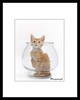 "<a href=""http://www.photographycorner.com/forum/showthread.php?t=608"">Kitten in a Fishbowl</a> by <a href=""http://www.photographycorner.com/forum/member.php?u=128"">Soopah</a>"