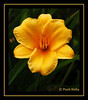 "<a href=""http://www.photographycorner.com/forum/showthread.php?t=410"">Yellow Flower</a> by <a href=""http://www.photographycorner.com/forum/member.php?u=48"">sinha_punit</a>"