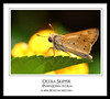 "<a href=""http://www.photographycorner.com/forum/showthread.php?t=851"">Ocola Skipper</a> by <a href=""http://www.photographycorner.com/forum/member.php?u=128"">Soopah</a>"